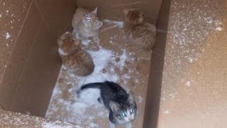 Four Kittens Left Outside In Cardboard Box During A Snowstorm Saved By Stranger