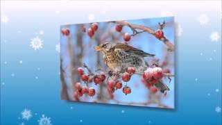 О птицах детям.Птицы зимой(http://youtu.be/B318xZ8-uFE О птицах детям.Птицы зимой ------------------------------------------------------------------------------------ С нами зимуют разны..., 2015-01-24T10:58:51.000Z)
