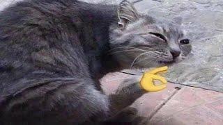 BEST CAT MEMES COMPILATION V05