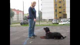 Rottweiler w obedience, Nitro Nice And Lovely FCI, 9 miesięcy