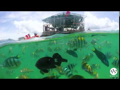 Looc Fish Sanctuary in Romblon