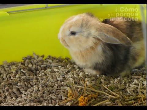 CONEJOS - La llegada del conejo a casa. ¿Qué necesita?