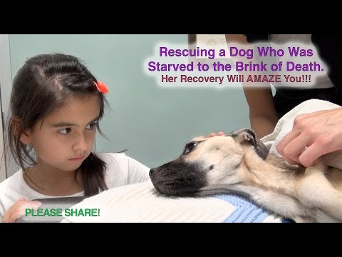 Rescuing a Dog Who Was Starved to the Brink of Death - Her Recovery Will AMAZE You! Please Share!