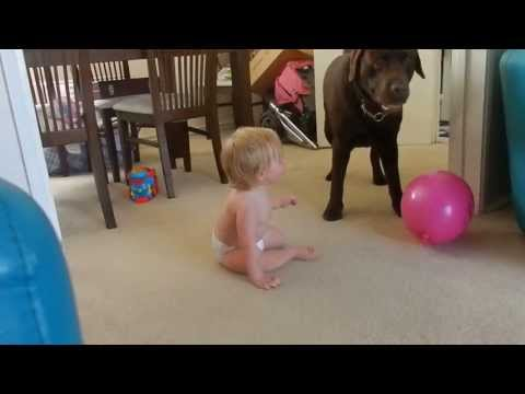 Baby laughing at dog playing with a balloon!!