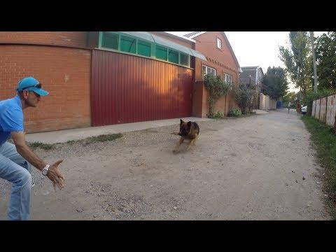 Как социализировать взрослую собаку