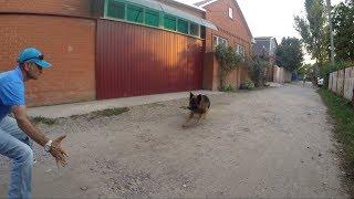 Социализация,чужие собаки и контроль над ними