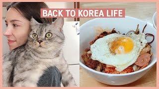 🐈Back in KOREA - Day in the Life 한국에 사는 국제부부와 고양이의 하루 24시간