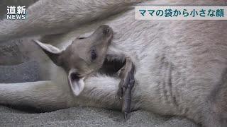 https://www.hokkaido-np.co.jp/movies/detail/5630652557001 札幌市円...