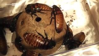 Выставка Ярмарка насекомых  2018.10.20 (часть 1)