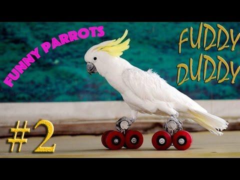 Подборка с попугаями