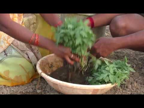 36 X 36 Model of farming in Natural Farming Method_ Kurnool