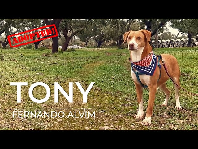 Eu sou o TONY