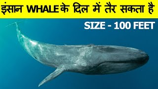 12 best enigmatic and most amazing facts in Hindi