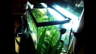 Красота! Рыбки выпрыгивают из аквариума(Девочка 2 года кормит рыбок, а они выпрыгивают, пытаясь достать червя., 2011-11-27T09:04:38.000Z)