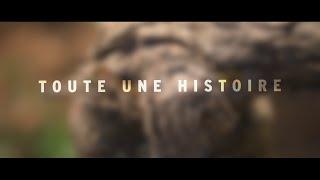 L'histoire du Beaujolais nouveau
