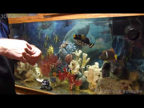 Saltwater Fish Compatibility And Care