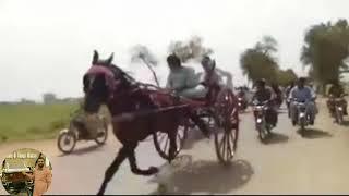 JANDHOLA HORSE VS DILBAR JANI HORSE RACE(WINNER JANDHOLA HORSE…