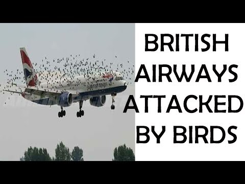 british airways attacked by birds