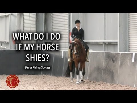 What do I do if my horse shies? - FearLESS Friday TV Ep 60