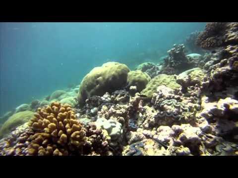 Stanford @ Sea @ Kingman Reef