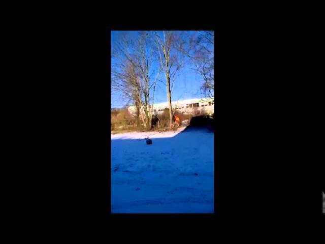 Ohtliku jalaka langetamine - www.arbormen.ee