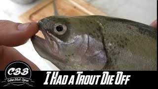I had a trout die off, and thought I should share some tips to tell if they are safe to eat.