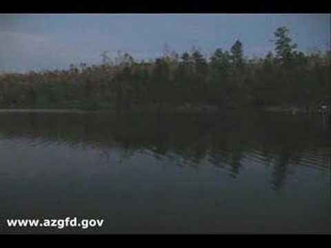 Black canyon lake arizona youtube for Canyon lake az fishing