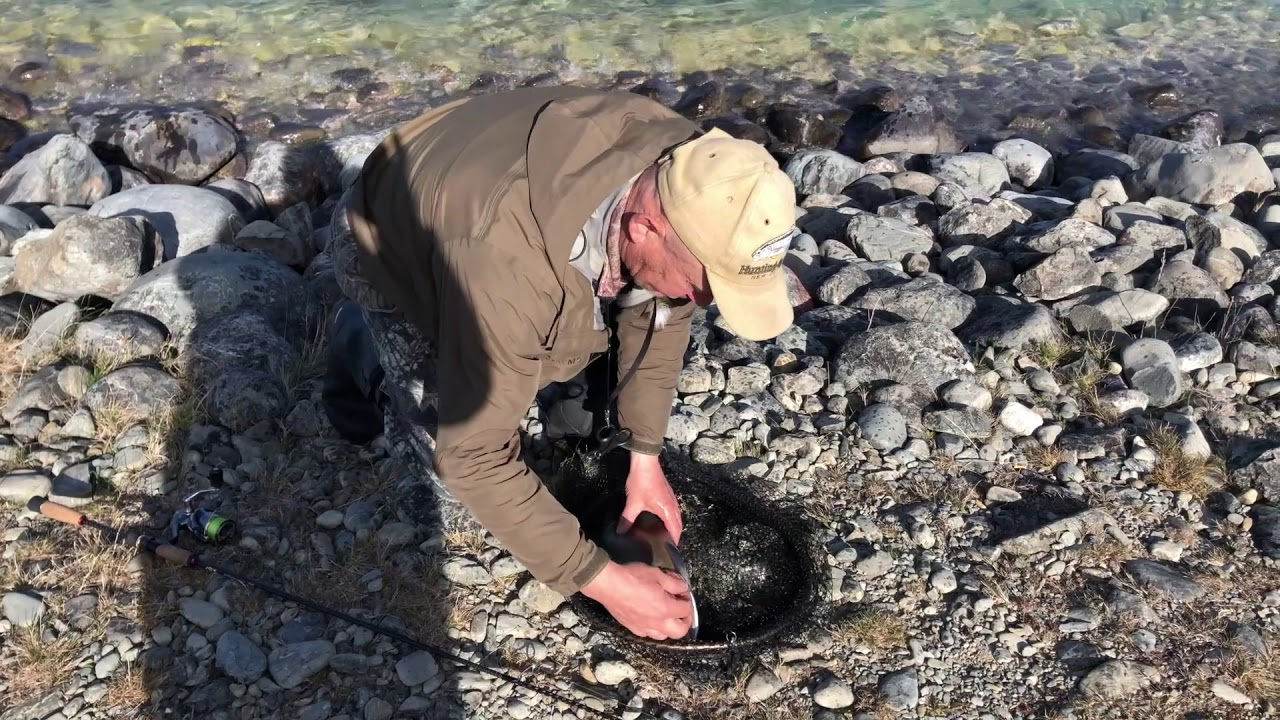 Как ловят Форель Новой Зеландии