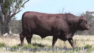 Lot 63 - Shannonbrook Outlaw P21 (P)