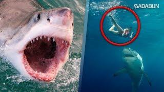 ¿Cómo sobrevivir al ataque de un tiburón?