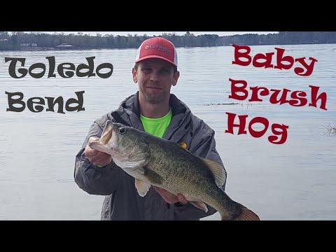 TOLEDO BEND BIG BASS Nailed A ZOOM Baby Brush Hog