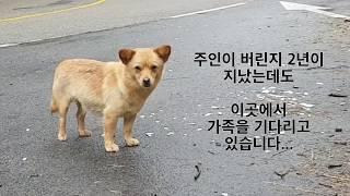 2년째 위험한 길에서 주인을 기다리는 슬픈 눈을 가진 강아지