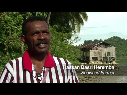 West Papua: Saved by Seaweed