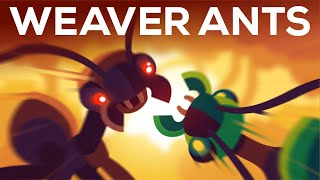 The Warrior Kingdoms of the Weaver Ant