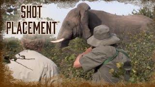 Shot Placement on Elephants | 6