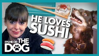 Spoilt Dog's Bizarre Favorite Food Gets Cracked Down On | It's Me or the Dog