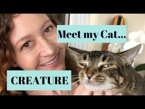 Meet my cat Creature - Abyssinian beauty found in a Dumpster!