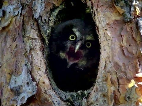 «Чудесный лес» 2014 / Добрый фильм о природе / Смотреть онлайн русский трейлер