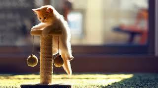 Чем опасны кошачьи царапины для человека?