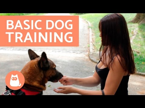 Teaching your Dog to Sit: Basic Dog Training