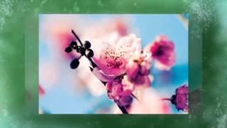 видео «С днем рождения» на английском – как составить пожелания