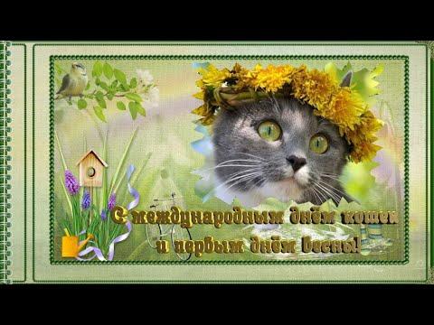 С МЕЖДУНАРОДНЫМ  ДНЁМ КОШЕК и первым днём весны!