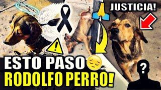 Rodolfo Corazon LA VERDAD del PERRO y el video en Los Mochis ¿Qué pasó? Justicia para Rodolfo 2021