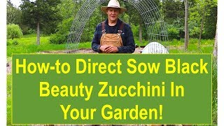Tips and Ideas on How-to Direct Sow Black Beauty Zucchini in Your Garden Containers