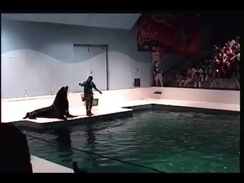 Sea Lion  in Boston Aquarium-Atlantic Wind Studio.avi