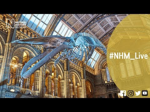Dippy about the whale with Lorraine Cornish and Richard Sabin | #NHM_Live