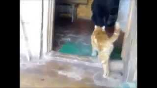 Смешные Кошки!  'Улыбнись   4'   ТВ