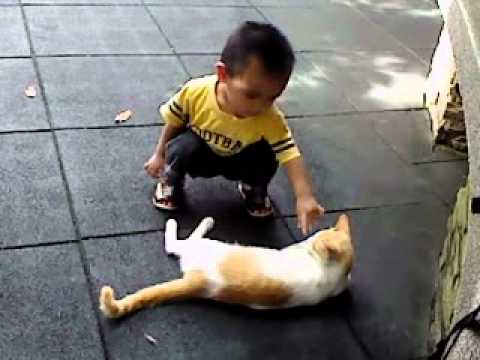 budak kecik n kucing Travel Video