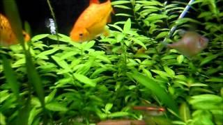 fish tank introduction aqua one ar 850