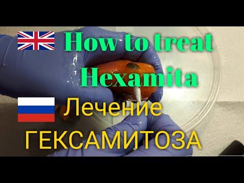 Рыбка заболела. Как ей помочь? Лечение гексамитоза у аквариумных рыбок.